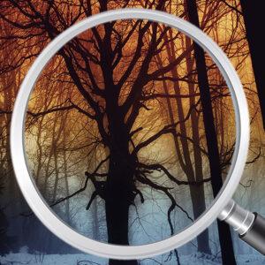 Adesivo de Parede Papel de Parede Floresta 0014
